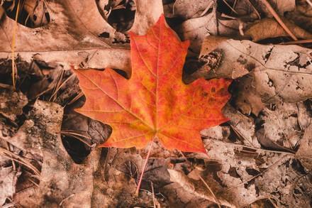 feuilles-mortes-compost-mon-coach-zero-dechet