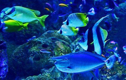 Les poissons menacés dans l'océan - Mon Coach Zéro Déchet